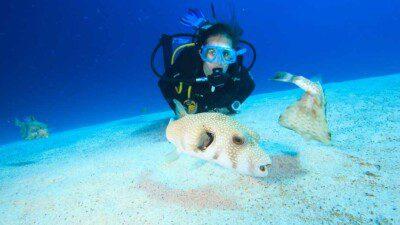 Poseidon Divers Dahab