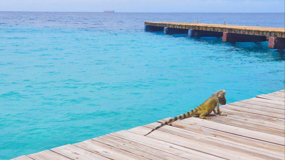 Dreams Curaçao Resort, Spa, & Casino